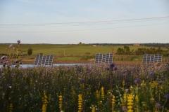 Blumenwiese-und-Solar